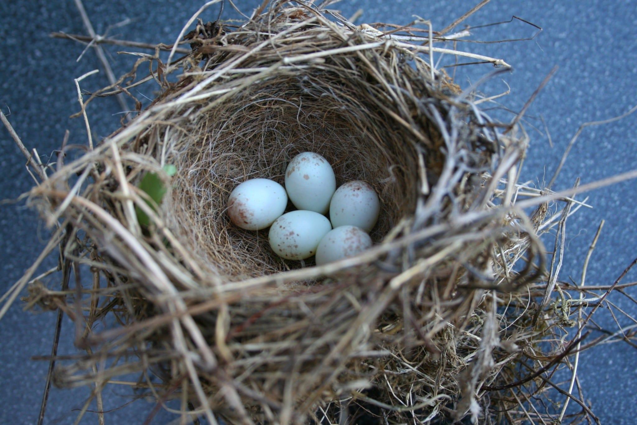 Loyaal naar je nest van herkomst